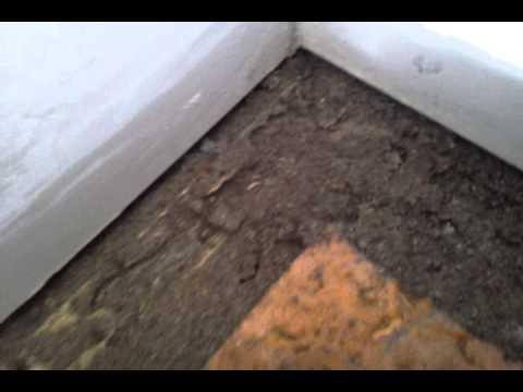 Termites Under Carpet Youtube