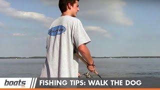 Як ловити рибу: прогулянки з собакою