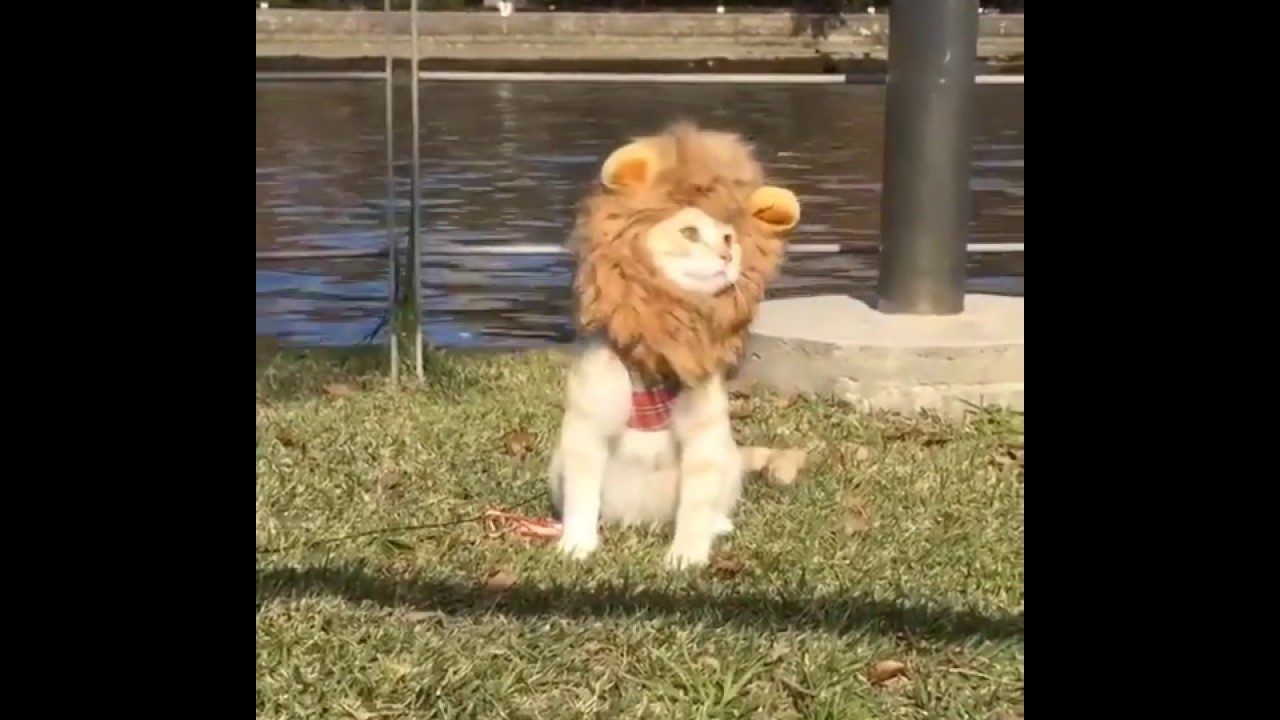 Cat in Lion Costume at the Park by the Canal