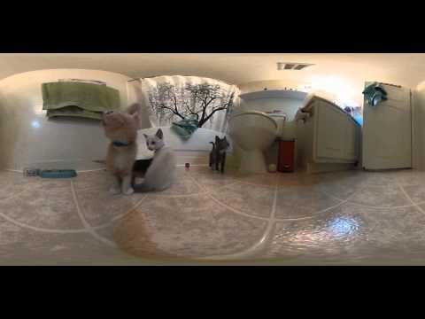 360 Kitten Video #VRKittens