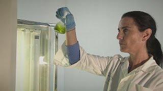 Alimentation, santé, cosmétique : les promesses des microalgues - futuris