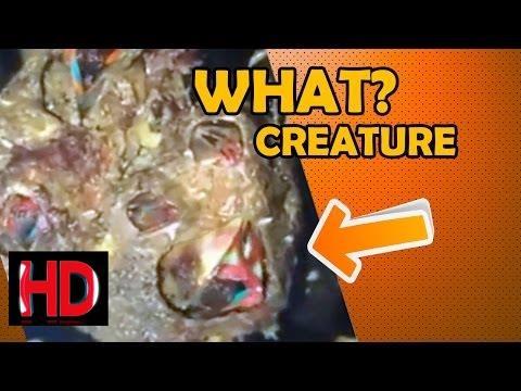 Sea Creature, Alien Lifeform, Plant or What?
