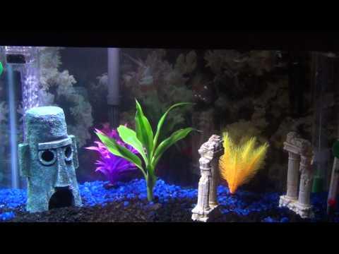 Fish Tank Aquarium Establishment Completion 10 Gallon part 1