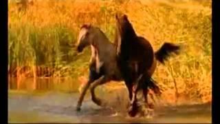 Красивая музыка о нежности и любви (Арабатский конь).mp4(, 2011-09-03T17:20:09.000Z)