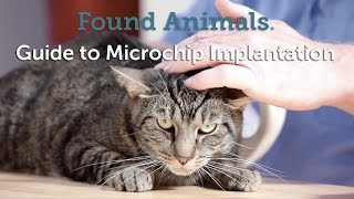 Popular Videos - Microchip implant & Carnivores