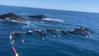 Whales Came Close to Kids Holding Swimming Rope