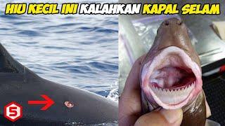 Ketika ikan hiu Sekecil ini Serang Kapal selam Perang Milik Amerika Serikat, inilah yg Terjadi...