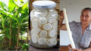 Como Tirar PALMITO da Bananeira – Como fazer Palmito da BANANEIRA