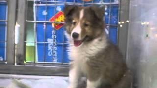 愛知県のわんわん動物園に行った時の動画です。 かわいいです.