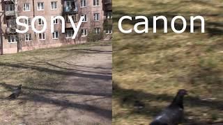 sony a 5000 или canon 600d качество видео(Тест камеры sony a 5000 в сравнении с камерой canon 600d. Камера sony a 5000 покупалась специально для съемки видео, мои..., 2016-05-08T14:26:14.000Z)