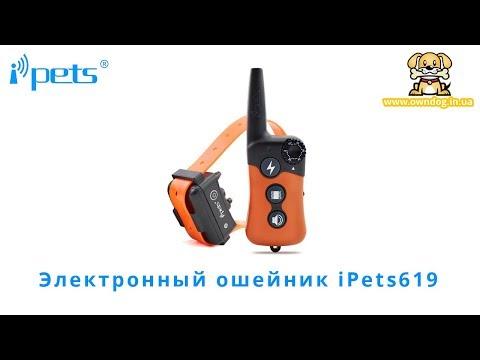 iPets 619 электроошейник купить для маленьких собак в Украине