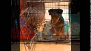 Kennel Training Puppy
