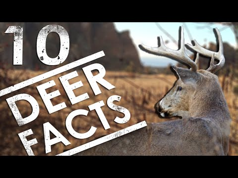 10 DEER FACTS Every Deer Hunter Should Know | The Sticks Outfitter EP. 17