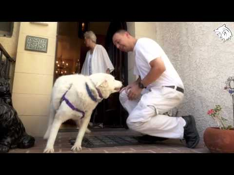 Rescue Dog ● Saving Miley MUST SEE rescue [Hope For Paws – Animal Rescue]