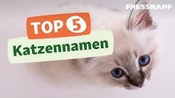 Top 5 Katzennamen