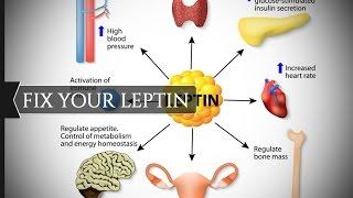 Похудение Почему не помогают диеты и фитнес Лептин