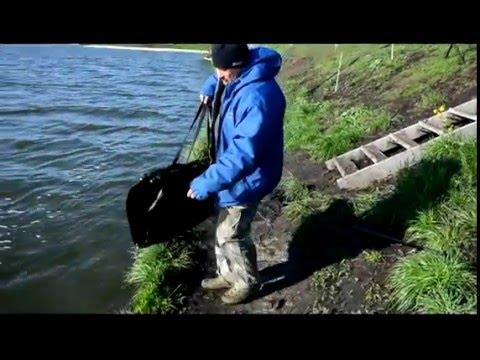 чемпионат белгородской области по ловле карпа
