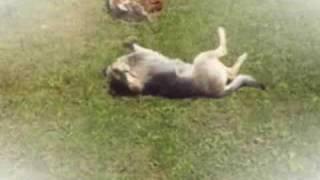 Klaus Densow - Hallo liebes Herrchen, Hunde und das Tierheim