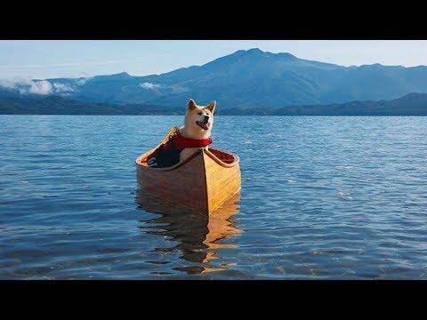 لم يستطيع الرجل ان يفهم السبب اين يسبح كلبه كل يوم ، فقرر تتبعه ، و اذهله ما أكتشفه