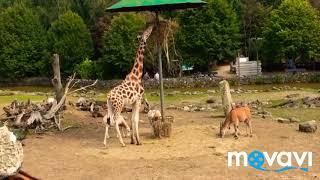 Dagje Olmense zoo