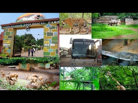 Relaxing Wildlife Nandankanan Zoological Park ODISHA,INDIA