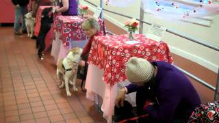 ARF's Valentine's Day-speed dating to meet the dog of your life