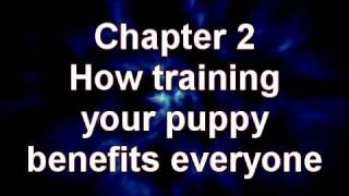 Yellow Lab Puppy Training