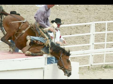 is rodeo cruel to animals The calgary stampede has a special rodeo farm for retired animals, many of which live out their days grazing in open fields myth 6: horses and bulls don't buck naturally walk up to any untrained horse, throw a saddle on its back, and get on.