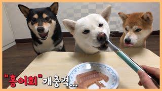 홍어회 먹방 도전! 강아지 반응은?!