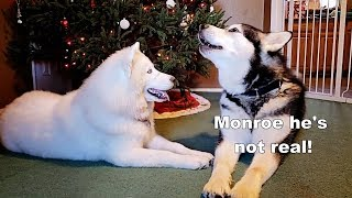 Funny Dogs | Argue About Santa Claus