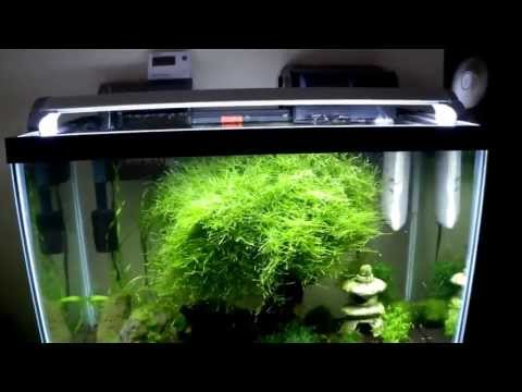 How to cool an aquarium 10 DEGREES! for under $20 DIY