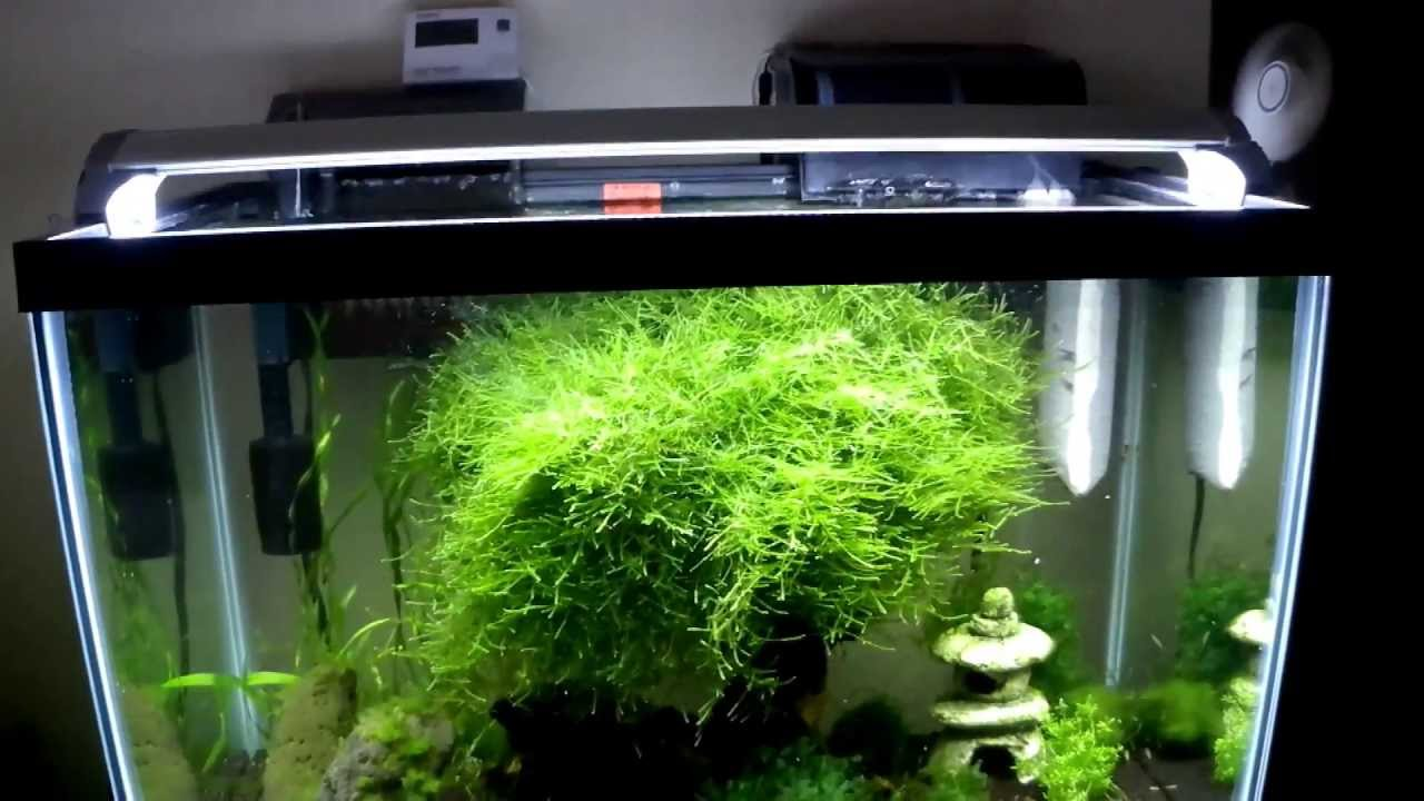 How To Cool An Aquarium 10 DEGREES! For Under $20 DIY   YouTube