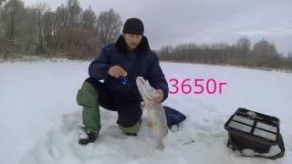 Зимняя рыбалка на р.Лесной Воронеж у п.Еремеево 2016.12.30