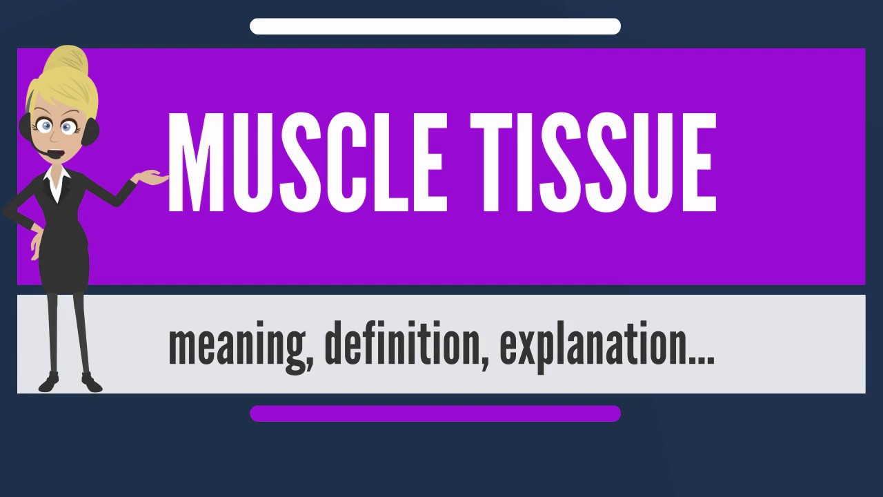 What Is Muscle Tissue What Does Muscle Tissue Mean Muscle Tissue