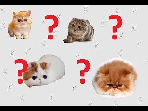 En Popüler 10 Kedi Irkı