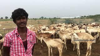 சொந்த காலில் நிற்கும் சிறுவன் | Profitable sheep farming in Tamilnadu