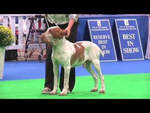 City of Birmingham Dog Show 2016 - Gundog group FULL