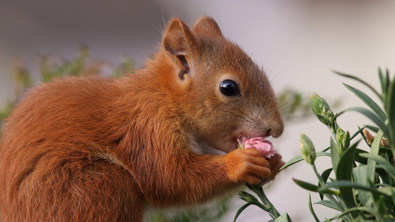 Eichhörnchen Film