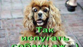 Смешные приколы с собаками. Так испугать собаку аж...)