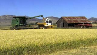 Beautiful rice harvest scenes from the Sacramento Valley