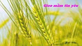 Gieo Mam Tin Yeu