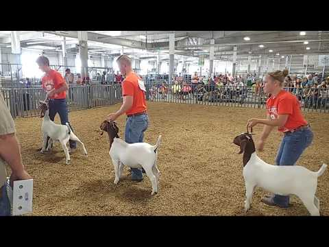 2018 Lancaster County Super Fair - 4-H & FFA Meat Goat Show