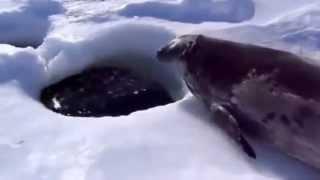 Тюлень все нормально? Рыбачишь?