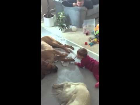Baby Erschreckt Hund Lustig