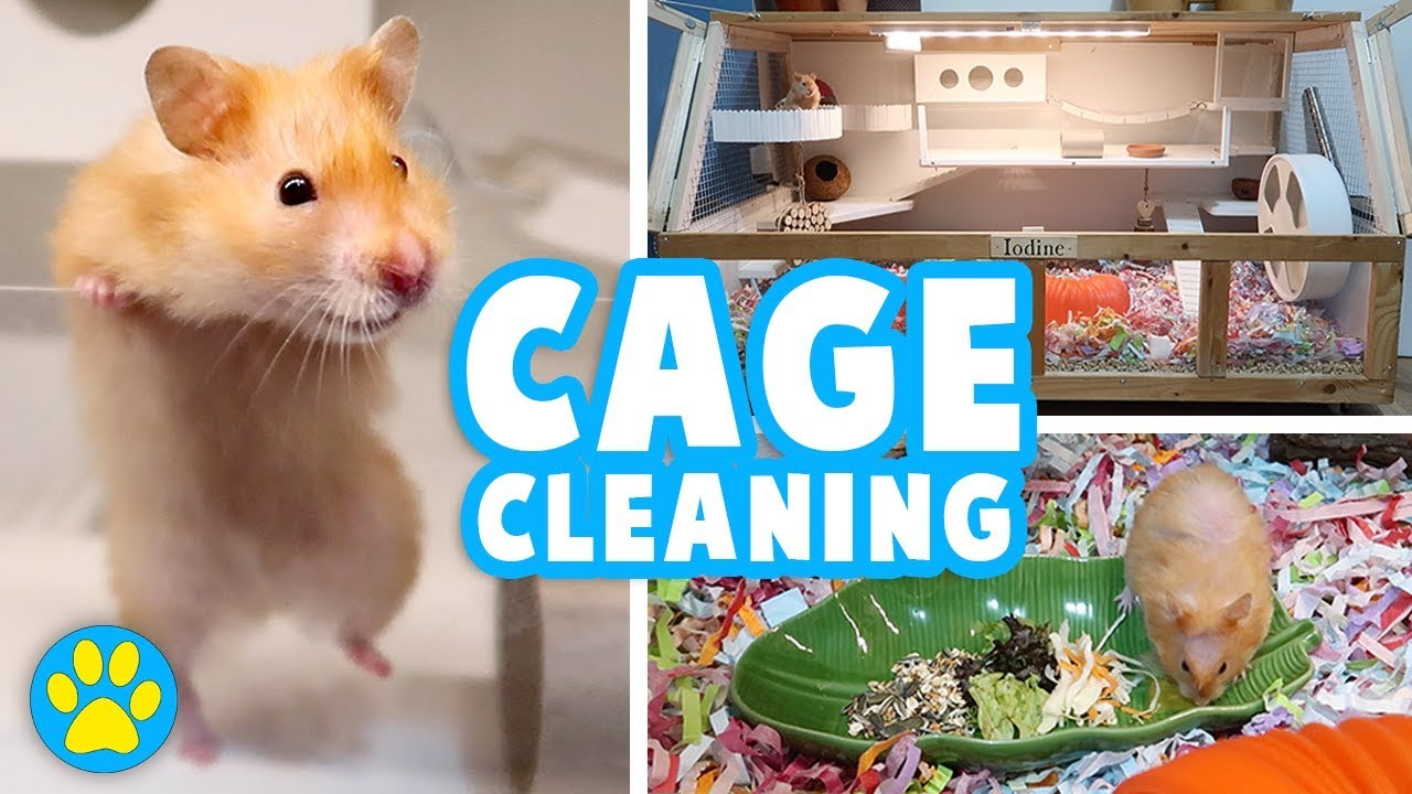Deep Cleaning Iodine's Cage | Hamster Allergies | Vlog