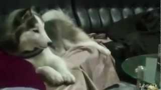 Эти удивительные животные)))