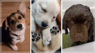 Hilarious Doggos ~ Best Dogs & Puppies Compilation