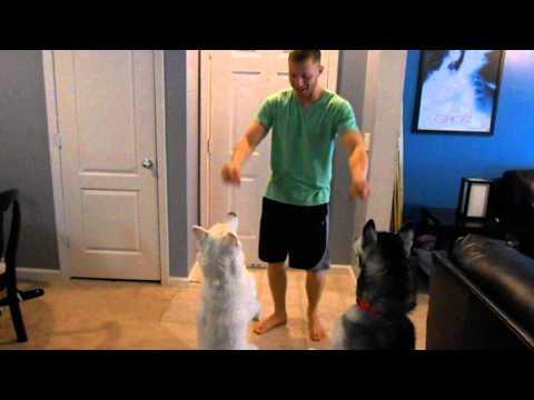 Husky Tricks