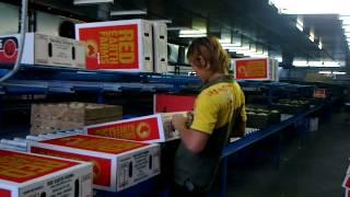 Kerja Di Australia Gaji 30juta Perbulan