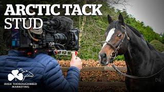 Irish Stallion Showcase 2021 - Arctic Tack Stud